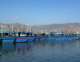 Tập đoàn Hoa Sen được làm cảng trước khi làm thép tại Cà Ná
