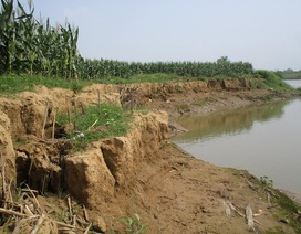 """""""Cát tặc"""" lộng hành, hàng trăm mét bãi bồi ven sông sạt lở nghiêm trọng"""