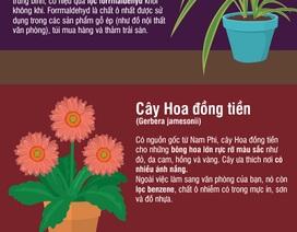 Inforgraphics: Trồng những cây này trong nhà, khỏi cần máy lọc không khí