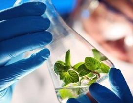 Quân đội Mỹ phát triển cây trồng biến đổi gen để làm… gián điệp
