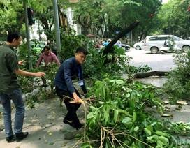 Hà Nội: Cây xanh bất ngờ đổ gục ở ngã tư