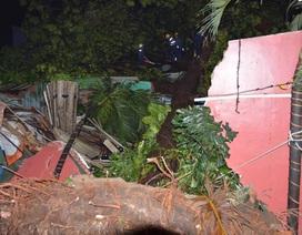 Cây cổ thụ đổ đè sập 4 căn nhà, hơn 10 người may mắn thoát chết