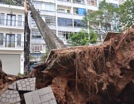 Cây cổ thụ đổ đè nhà 3 tầng ở trung tâm Sài Gòn
