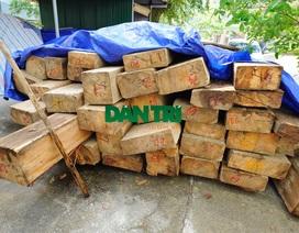 36 cây sa mu dầu bị chặt, trưởng trạm quản lý rừng bị cách chức