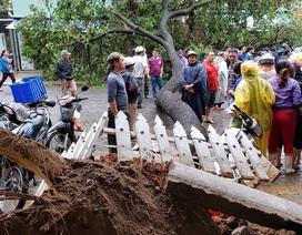 Chủ tịch Đà Nẵng kêu gọi người dân khắc phục hậu quả mưa bão đón APEC