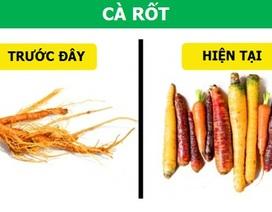 Các loại rau-củ-quả trông thế nào trước khi con người thuần hóa chúng