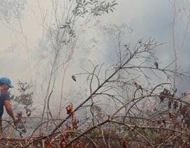 Cháy hơn 4.000 m2 rừng phòng hộ