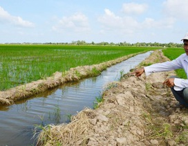 Sóc Trăng: Người chặn đứng dòng nước tưới lúa của nông dân thua kiện!