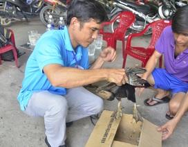 Bàn giao chim quý bắt được ở Sài Gòn cho Thảo Cầm Viên