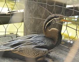 Giăng lưới bắt được chim quý ở Sài Gòn