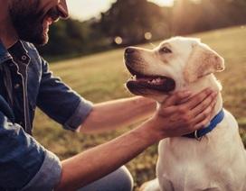 Con người còn yêu chó nhiều hơn cả đồng loại?
