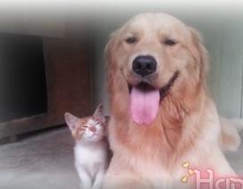 """""""Tan chảy"""" với chuyện tình lãng mạn của cặp chó - mèo bất chấp tất cả để đến với nhau"""