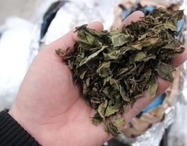 Tạm giữ lô hàng nghi ngờ chứa lá Khát để sản xuất ma túy đá
