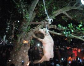 Sở Văn hóa Yên Bái nói gì trước clip treo cổ trâu ở lễ hội Đông Cuông?