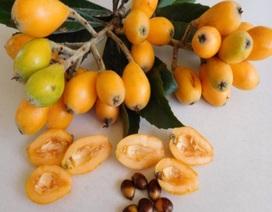 """Sự thật về quả biwa Nhật 4 triệu/kg khiến dân Hà Thành phát """"sốt"""""""