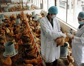 Phát hiện chủng cúm chết người biến đổi độc lực, tăng tốc độ lây truyền đến 1000 lần
