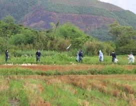 Phát hiện thêm một ổ dịch cúm A H5N1, tiêu hủy hàng trăm con gia cầm