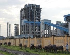 Nhà máy Đạm Ninh Bình thua lỗ ngàn tỷ vì đâu?