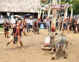 Lễ hội đâm trâu, chém lợn và sự thái quá niềm tin tín ngưỡng