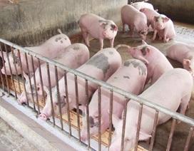Bộ trưởng Bộ Nông nghiệp: Thịt lợn đang bị khủng hoảng thừa nghiêm trọng