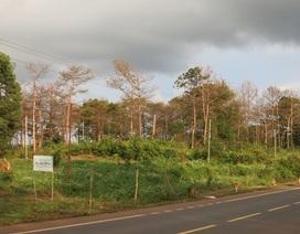Kỷ luật hàng loạt cán bộ sai phạm cấp sổ đỏ trên đất rừng