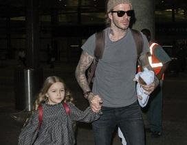 David Beckham tiếp tục làm bố đảm