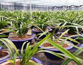 """Vườn địa lan Hoàng Vũ """"khổng lồ"""" trị giá hơn 15 tỷ đồng trên đất Thành Nam"""