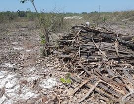 Xử lý dứt điểm việc phá rừng phòng hộ để nuôi tôm trên cát