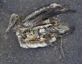 """""""Ám ảnh"""" những động vật ngắc ngoải chờ chết bởi rác thải của con người"""
