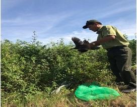 Thả cày vòi hương và 6 cuốc ngực trắng về Khu bảo tồn Sơn Trà