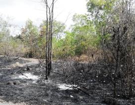 Bắt quả tang 2 người đốt rừng ở Phú Quốc