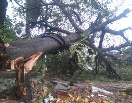 Bão số 4 đã đổ bộ Quảng Bình - Quảng Trị, nhiều nơi mưa lớn