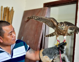 Bộ sưu tập chim săn giá 300 triệu của dân chơi Hà Nội