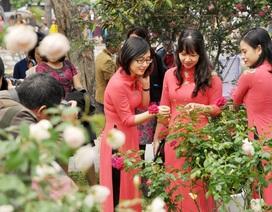 """Lễ hội hoa hồng """"gây tranh cãi"""" được phép kéo dài đến hết ngày 8/3"""