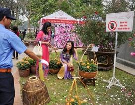Bất lực bảo vệ Lễ hội hoa hồng