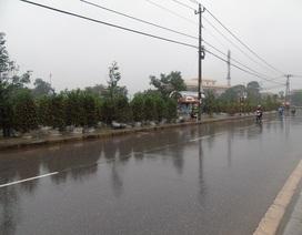 Quảng Bình: Người bán hoa Tết khóc ròng vì trời mưa rét