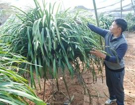 Thu hàng trăm triệu từ bán địa lan Trần Mộng Sa Pa dịp Tết