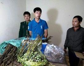 Vận chuyển cây thuốc phiện từ Lào về Việt Nam tiêu thụ