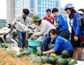 """Sinh viên Hà Nội tiếp tục chiến dịch """"giải cứu"""" dưa hấu Quảng Ngãi"""