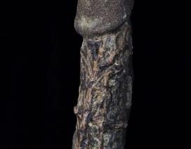 Trưng bày xác ướp dương vật dài gần 18cm