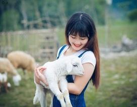 Chiêm ngưỡng đàn cừu đầu tiên của xứ Nghệ