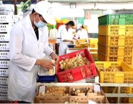 Câu chuyện về người nâng tầm cho giống gà bản địa Việt Nam