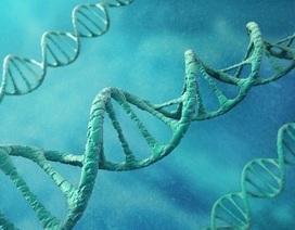 Các nhà khoa học phát hiện gen liên quan đến đồng tính luyến ái