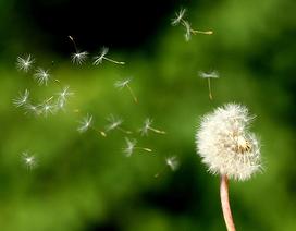 """Học tiếng Anh mỗi ngày: Nhiều cách biểu đạt từ """"gió"""""""
