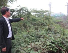 Nghệ An: Có phán quyết của tòa, HĐND tỉnh vẫn ra Nghị quyết thu hồi đất!
