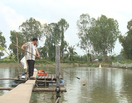 Nông dân nuôi cá tra khóc ròng, nghi bị đại gia thủy sản lừa, ôm tiền tỷ bỏ trốn