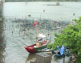Hàng chục tấn cá nuôi ven cửa biển chết chưa rõ nguyên nhân