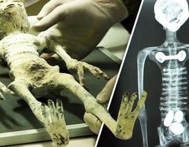 """Xác """"người ngoài hành tinh"""" bên trong hầm mộ Peru đang mang thai?"""