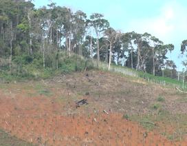 Tàng trữ lựu đạn, súng, dao kiếm để bảo kê phá rừng