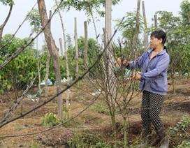 Bón phân… quá chất lượng, nông dân nhận trái đắng